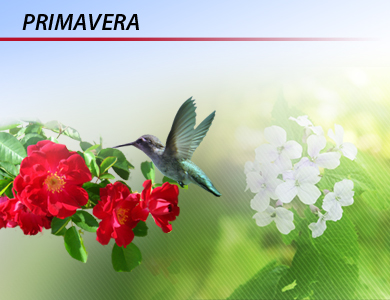 CONHE�A AS CARACTER�STICAS DA PRIMAVERA!